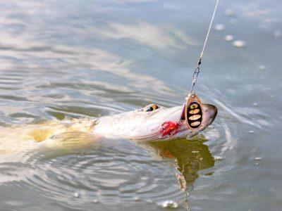 hook fish when it bites