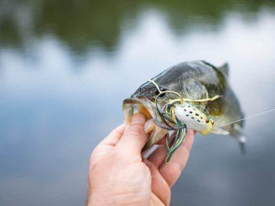 what largemouth bass eat